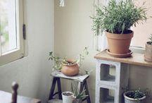 Déco - Plantes