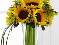 Sunflowers / Purchase gorgeous Sunflowers from Let Life Bloom. We offer nationwide same day flower delivery.
