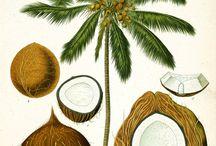 Caribbean Botanic Prints