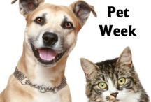 Pet Holidays / Every month dedicates a day, week, or the month to pets for various things.