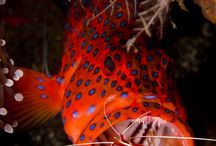 Bali Underwater Experience / 10 best underwater spots in Bali. Indulge your eyes with the colorful corals and fishes with the gracious feeling of beautiful nature....