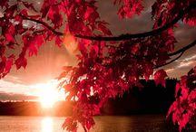 Csodás Ősz