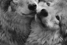Wolves / And they goes awoooo
