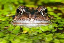 Wildlife ponds :-) / Wildlife ponds for tiny spaces