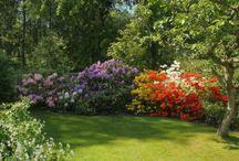 Drömmarnas trädgård