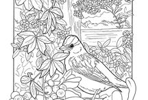 Coloring pages / Most of these are downloaded from the Dover publisher web site. You need to sign up for emails to get access to the free samples. They are posted once a week and then removed. This is my collection over 2 years. Go ahead and sign up with Dover to get some great samples too. / by Andrea Snow Aberle