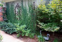 Urban courtyard / Plants for your garden