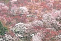 Japan / 日本の風景など / by Kyoko Umeda