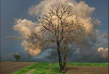Puut, pensaat, lehdet, metsä
