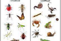 ECOLE. zoologie - animaux