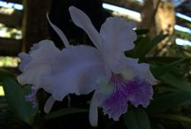 Places to Visit in Cuba: Soroa Orchid Garden / Within the Sierra del Rosario at Soroa, is the orquideario, or orchid garden. This garden is the largest in Cuba and covers an area of 35,000 square metres on a steep hillside.