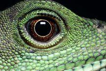 Tapety - zwierzęta - gady