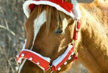noel horse