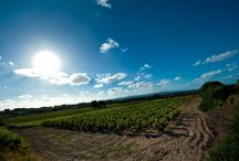 Wine Tasting in South Sardinia / Sardinia is a perfect destination to organize a wine tasting. Here you can find a guide to the best winery in South Sardinia