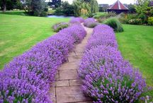 Сад / Интересные задумки для сада и дачи