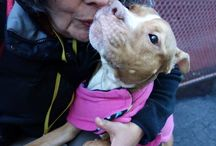 Adoptable Dogs / Dogs in need of rescue!