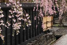 japane culture