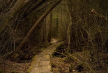 Path   Ścieżki dukty leśne