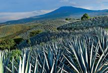 Destinos / Lugares que vale la pena visitar en México.