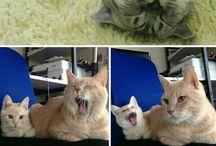 Cute Cat Photobombs To Make Me Smile