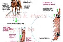 häst fakta