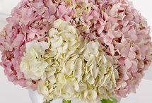 flowers / by Tanisha