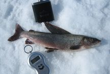 Ice-fishing / Ice-fishing in Finnish Lapland. http://grandma-in-lapland.com
