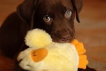 Puppies!!!!!!!