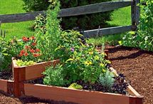 SCHOOL & COMMUNITY / gardening; enviro edu