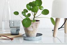 Indoor plant trends