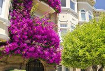 Flowering balconies