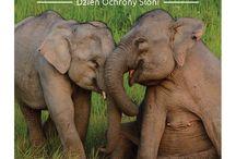 Dzień Słoni