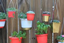 Kamaka's Garden / What's growing at Re-Use? Visit our container garden and enjoy these tips and tricks for your own gardening adventures.