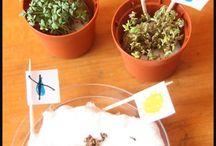 Experimentacio plantes