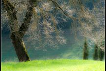 """pictures / nature around the farmstay """"agriturismo Casa Luna"""" Poppi Tuscany"""