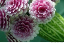 flowers decor / by Dianne Tant