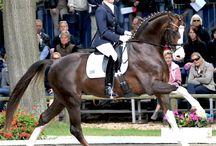 <Top Class Horse >