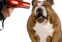 24 Hour Doggy Store / Everything you need to know about #dog training, #puppy health care & dog grooming!