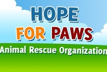 """OUR """"HOPE FOR PAWS"""" Help / Pins are for HOPE FOR PAWS, an amazing organization with such a dedicated ability for rescue of the seemingly lost furkids. Their sacrifices to locate & """"bring them home"""" to rehab & rehome goes beyond imagination. So whenever & wherever we can, let's help. Thanks for no offensive language! PLEASE DONATE! I give monthly donations."""