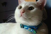 Ucretsiz Kedi İlani