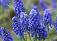 Wisconsin Perennials / Gardening