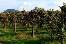 Ugo Vezzoli / Un'aquila che sovrasta una botte è il simbolo dell'azienda e, prima ancora, della famiglia Vezzoli: una famiglia che ha nelle sue radici la tradizione enologica e il legame con il territorio.  Scopri i vini Ugo Vezzoli su Excantia: http://www.excantia.com/produttori/cantine/ugo-vezzoli