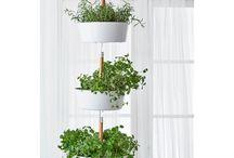 Plant/vase ideas