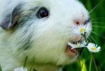 Animales bonitos / animals