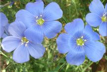Alberta flowers