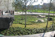zieleń publiczna