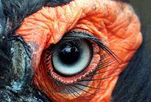 birds - Hornbills (bucerotiformes)
