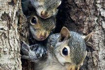 love eekhoorntjes