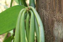 Hur nötter,frukt och grönsaker växer