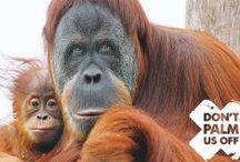Zoos Vic Campaigns